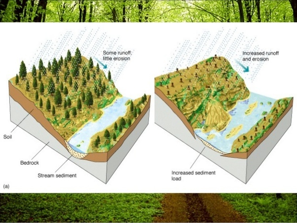 How does deforestion lead to flooding? - Quora