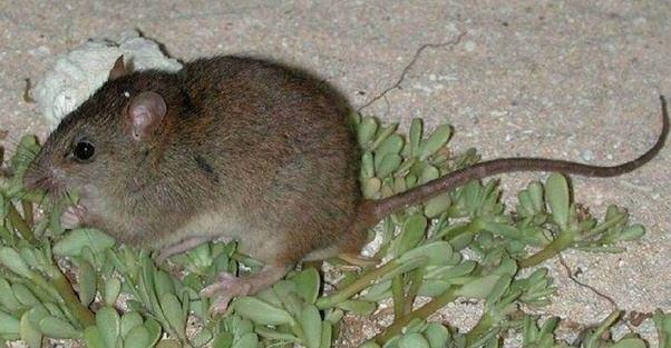 what animals went extinct in 2016 quora