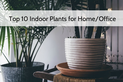Plants Are Useful For Us Be It Inside Our Home Or Even At The Workstation  Inside Our Offices. Given The Fact That Most Of Us Spend A Good Eight Or  More ...