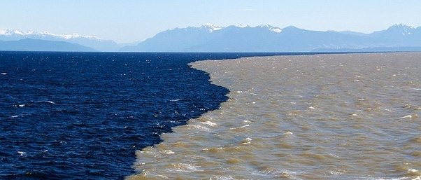 where freshwater and saltwater meet