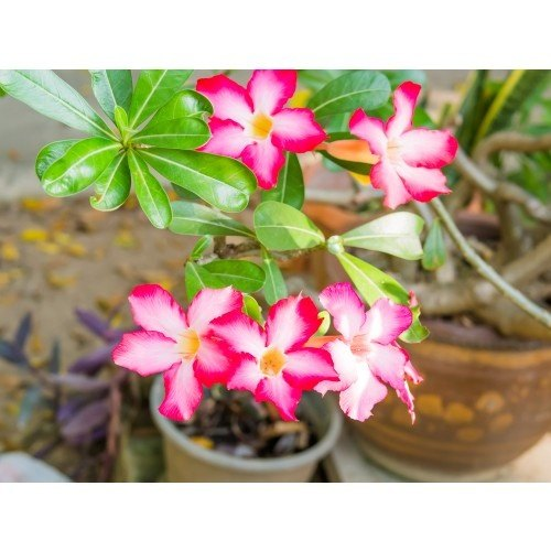 Indoor Gardening Plants What are the best indoor flowering plants quora these are the above best indoor gardening plants and they are easy for maintenance as well for more details you can visit us mycloudforest online plants workwithnaturefo