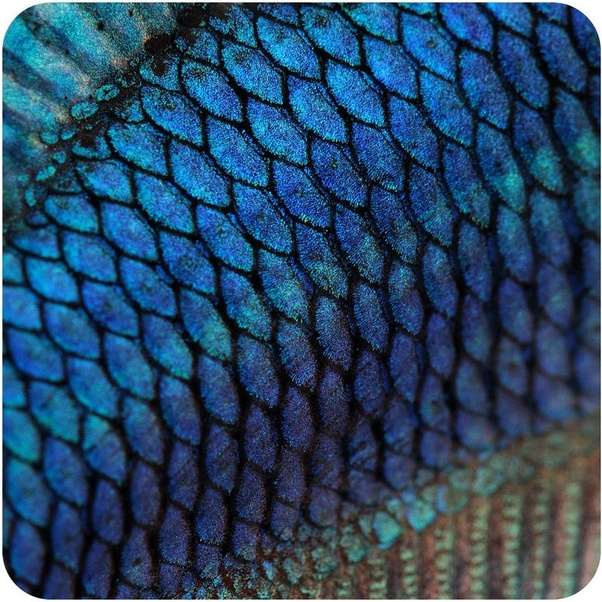 Why Do Some Fish Have Scales And Some Don U0026 39 T