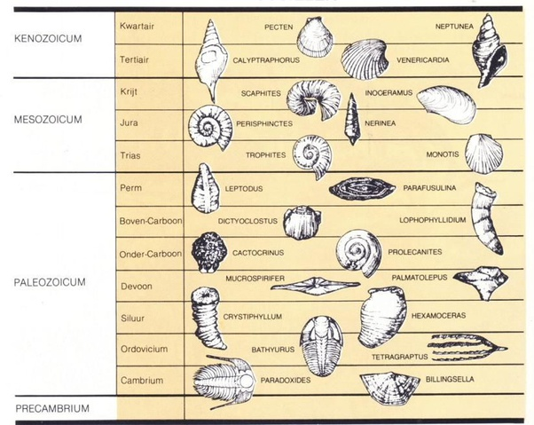 Best are the index fossils List of