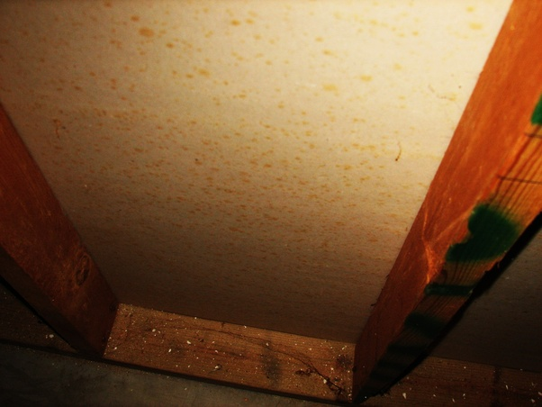 What Does Rust Colored Mold Mean Quora