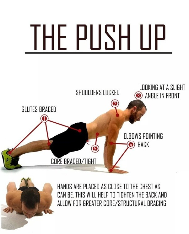 If i did push ups pull ups and abs work in addition to for Plank muscles worked diagram