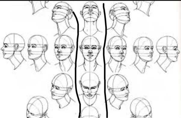 How To Draw Face Proportions Quora