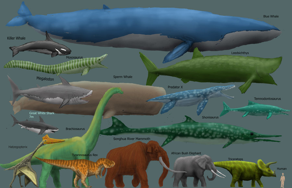What is the largest animal that has ever lived? - Quora