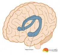 How does our brain memorize things quora there are many types of memories emotional memory procedural memory automatic memory sematic memory human brain ccuart Images