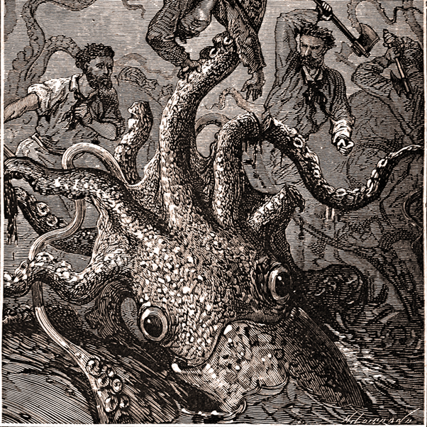 What does a Kraken look like? - Quora