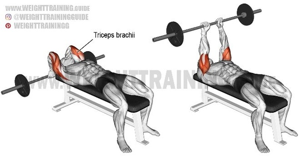 What Is The Best Exercise To Build Triceps Quora