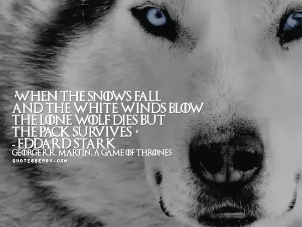 Lone Wolf Quotes 17 Best Images About Wolf Quotes On Pinterest