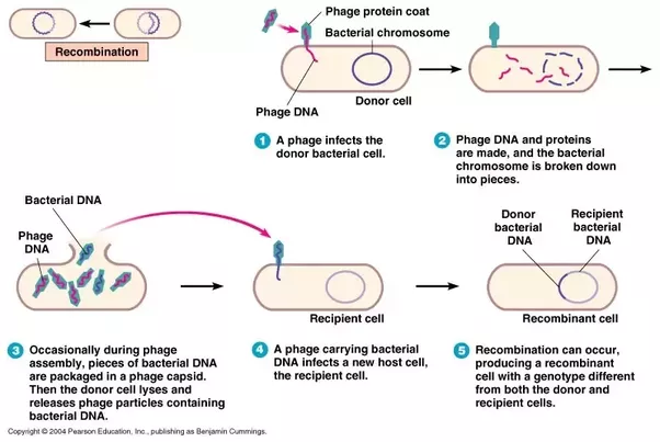 How Does Horizontal Gene Transfer Work
