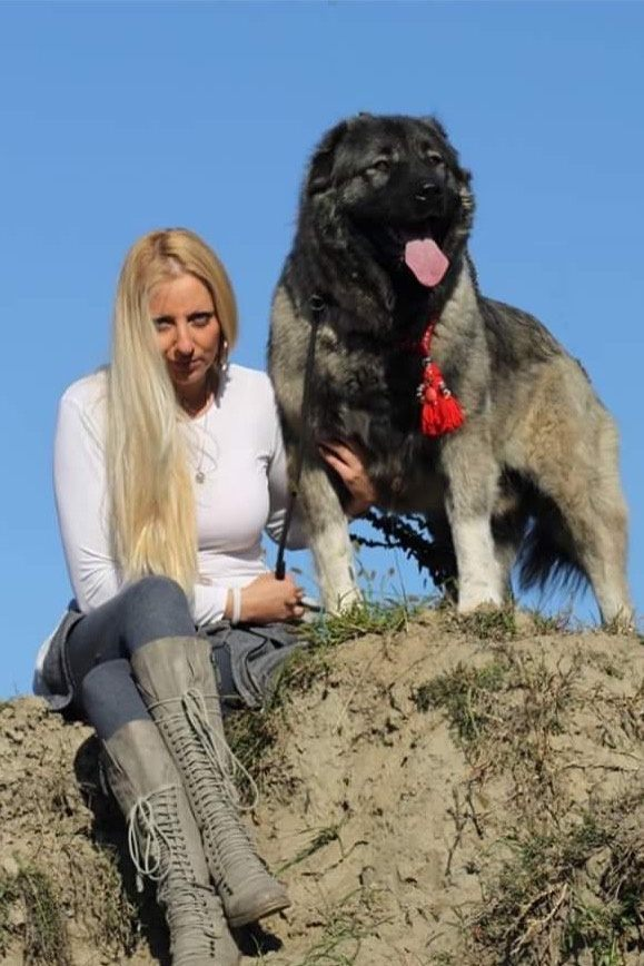 Which Dog Breeds Can Beat A Turkish Kangal Quora