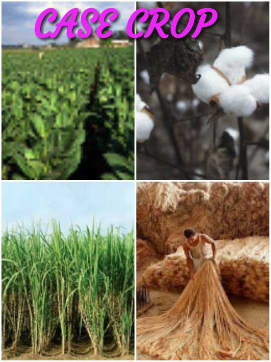 What Are The Cash Crops In India Quora