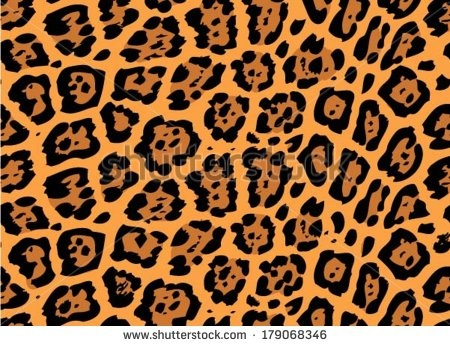 What Is The Difference Between Leopard Panther Jaguar