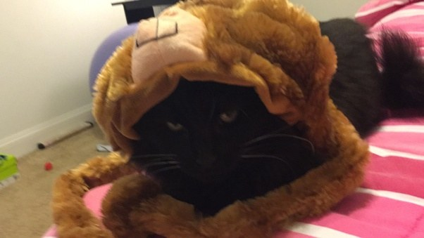 How Often Should Your Cat Visit the Vet? - Mercola.com