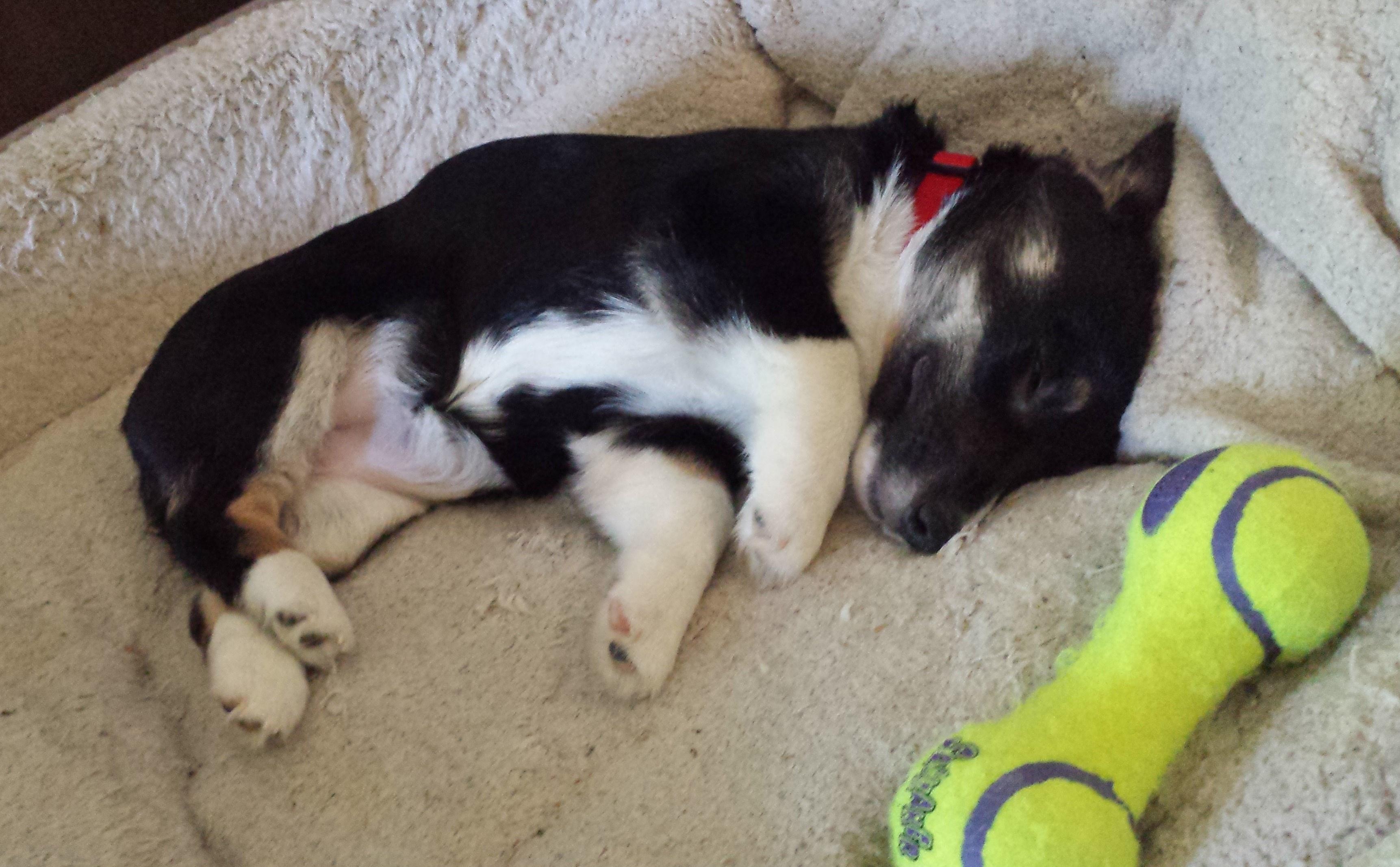 Why does my dog sleep facing a corner? - Quora