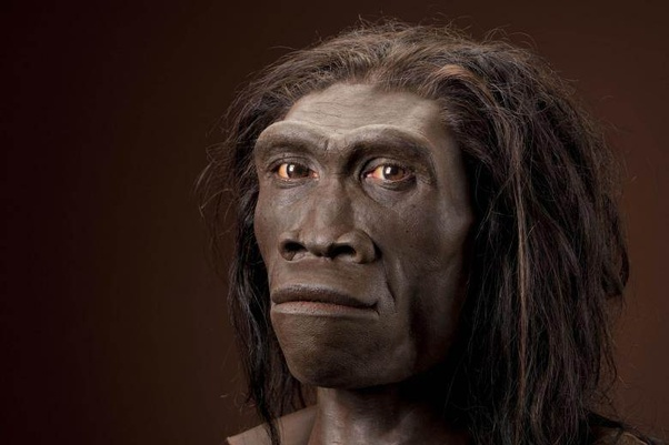 Why is it that homo erectus is usually reconstructed as a ...
