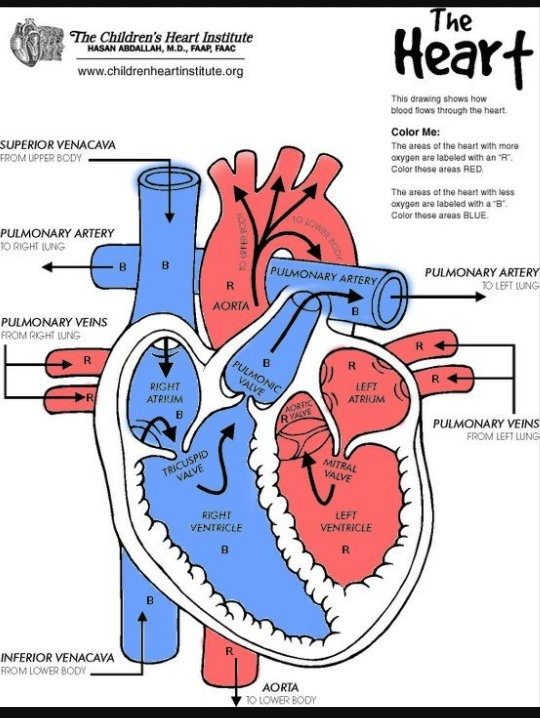 What is the name of the organ which is responsible of ...