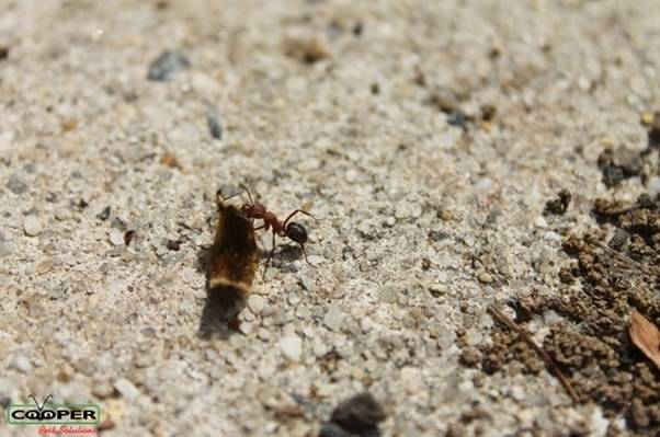 How To Naturally Get Rid Of Ants In Your House