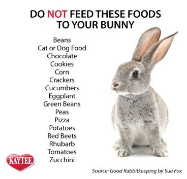 Can You Feed A Baby Bunny Dog Food Quora