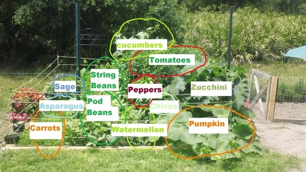 Superieur What Is The Best Garden Set Up For Vegetables Quora