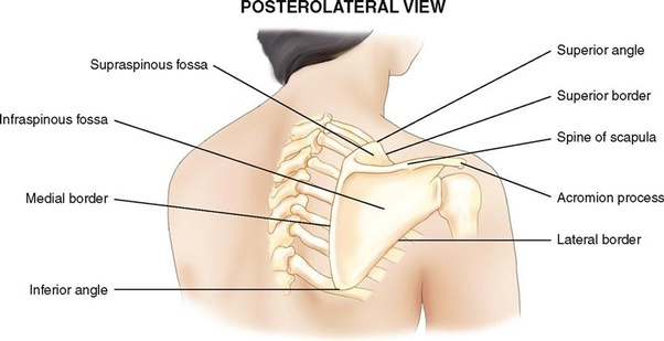 Why is there a bone sticking out in both of my shoulders? There is ...