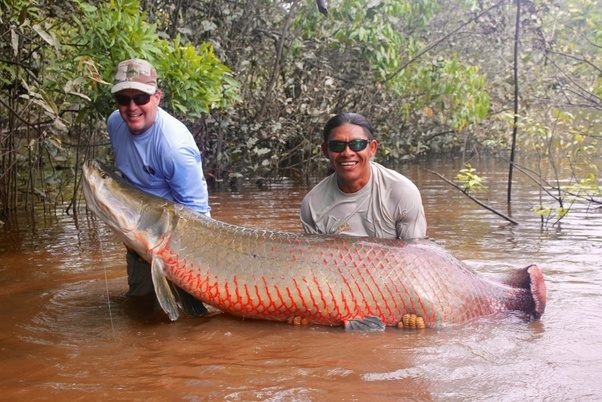 What are some rare and best photos of amazing big fishes ...