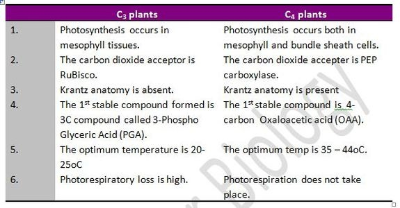 What is the difference between C3 and c4 plants? - Quora