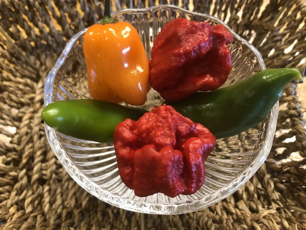 Fuck this hot ass pepper What Does It Feel Like To Eat A Carolina Reaper Quora
