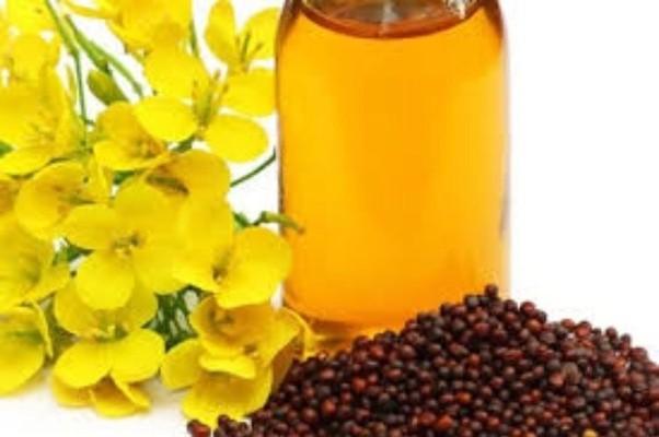 Is Mustard Oil Good For Hair Quora