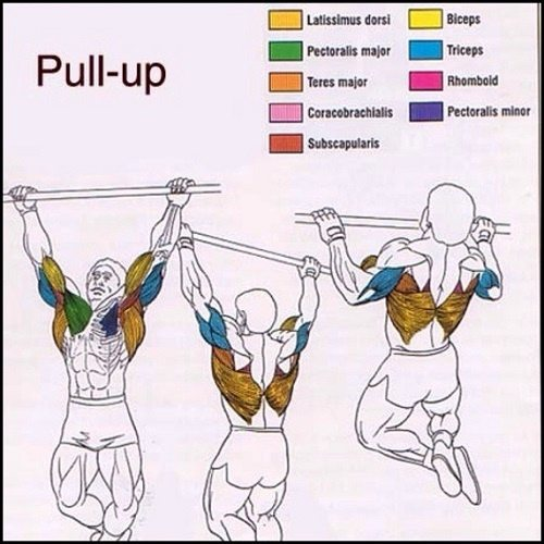 What S The Best Way To Start Doing Pull Ups Quora