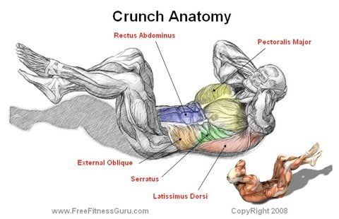 What do crunches do quora for Plank muscles worked diagram