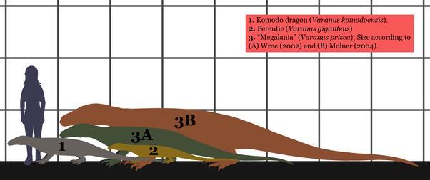 Komodo Dragons Diagram Length Trusted Wiring Diagram