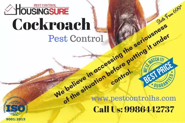 Best Solution For Bed Bugs India