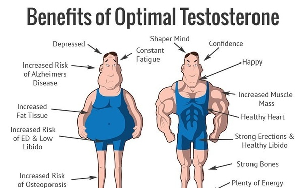 Does training legs increase testosterone levels? - Quora