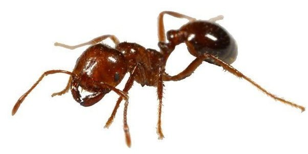 The Total Weight Of Ants On Earth Is Equal To The Humans How Did Scientists Come This Conclusion
