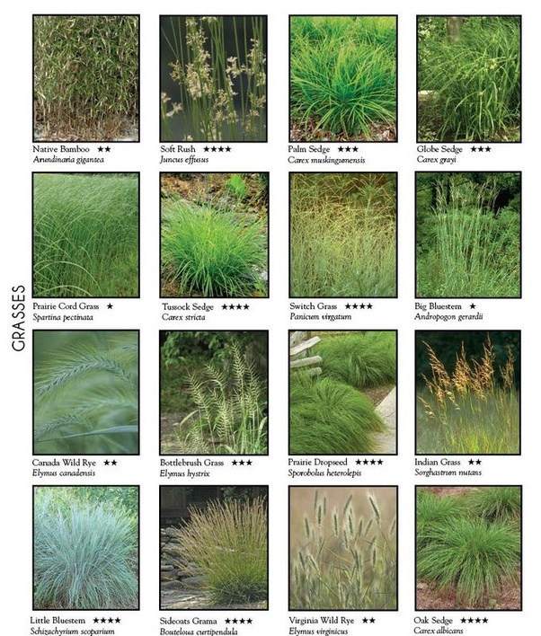 how to tell what type of grass lawn you have