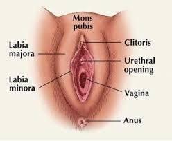 Womens clitorius