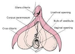 de plek g en Clitoris