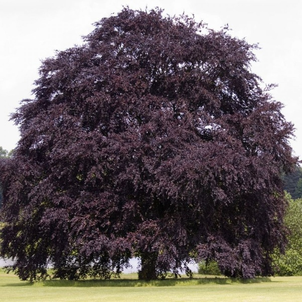 What will happen to a tree when it gets a steady supply of ...