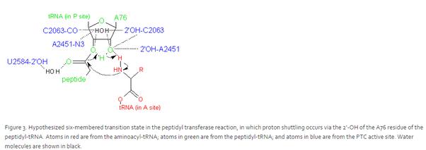 what kind of bonds hold amino acids together