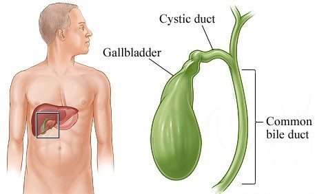 What is the main function of the gallbladder quora its primary function is to store and concentrate bile a yellow brown digestive enzyme produced by the liver the gallbladder is part of the biliary tract ccuart Images