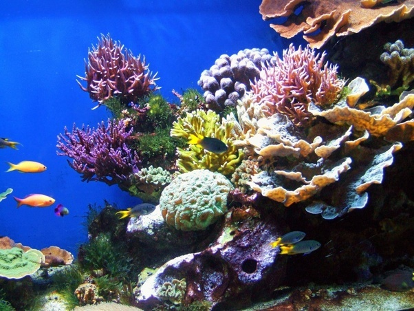 What are the different types of corals for a reef tank quora coral as a group is really large and diverse even limiting yourself to what is available and in stock youll still have dozens if not hundreds of species publicscrutiny Images