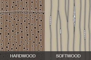 What Isdifference In Structures Of Soft Wood And Hard Wood Quora