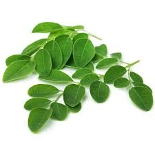 What are the long term effects of eating moringa seeds in