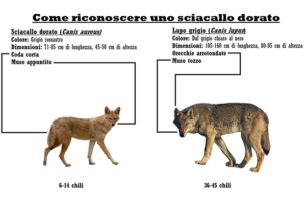 Cat Vs Dog Difference And Comparison