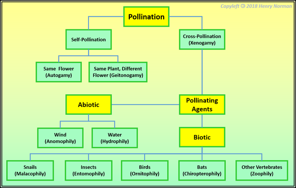 What Are The Agents Of Pollination How And Why Quora