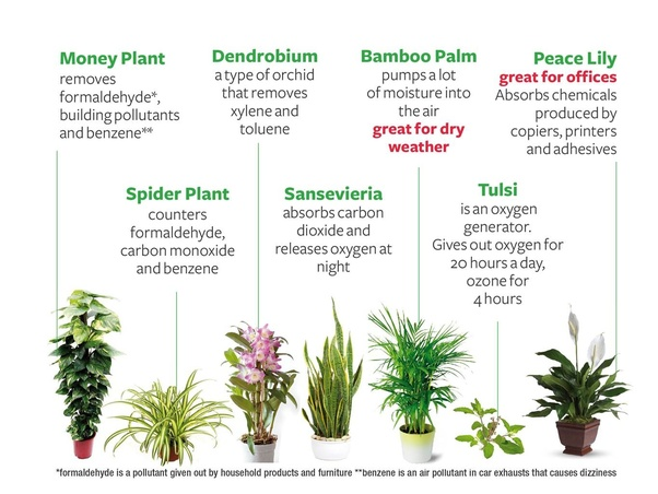 How To Reduce Indoor Air Pollution By Using Plants Quora