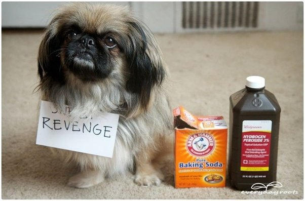 How To Get The Smell Of Dog Urine Out Of The House Quora